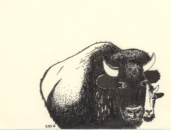 drawing of buffalo
