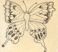 drawing of butterfly
