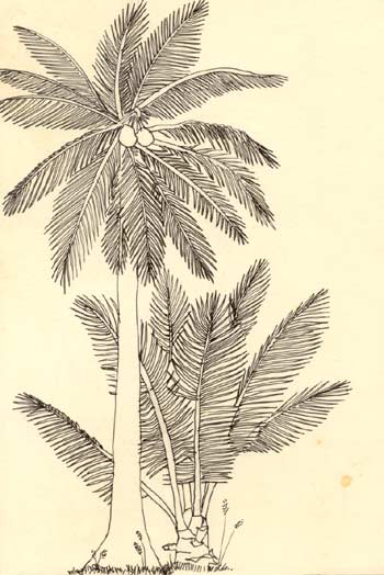 drawing of palm tree