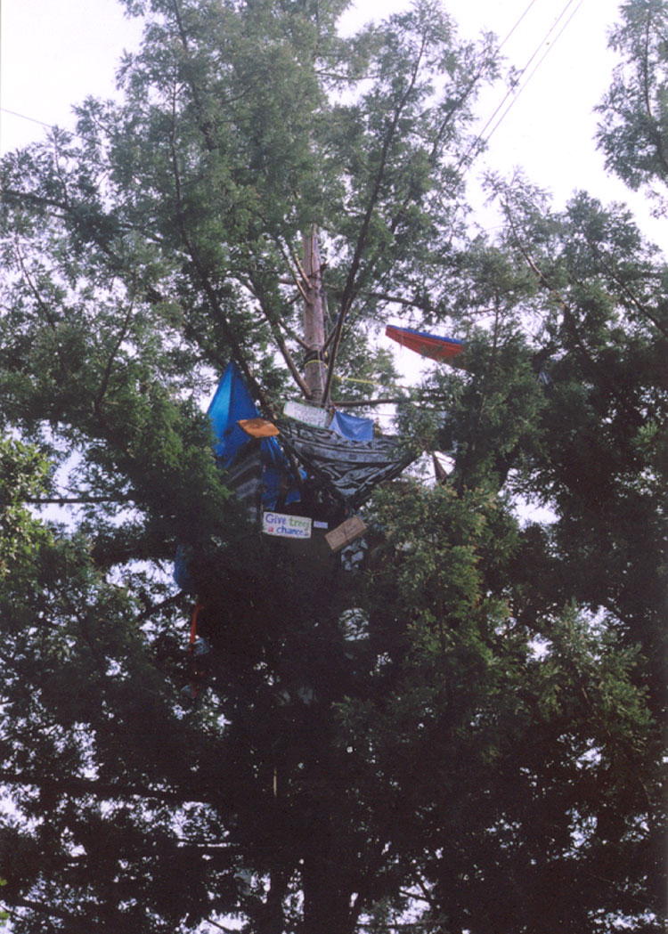 tree sit up at ucsc